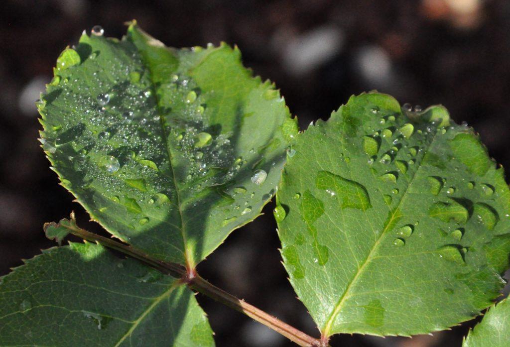 énergie vitale, feuilles, eau