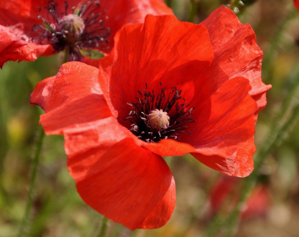 naturopathie, fleur