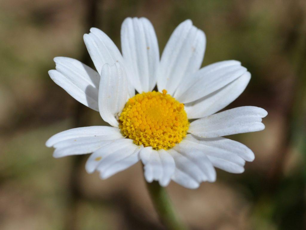Fleurs de Bach, soleil, nature
