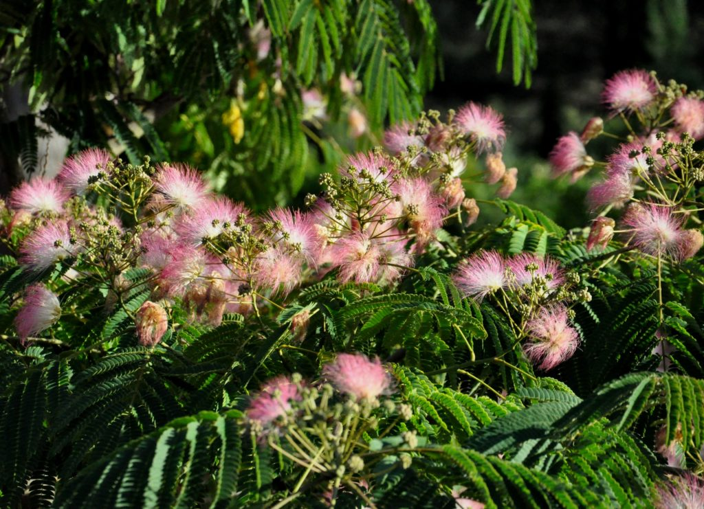 Conseils, consultation de naturopathie