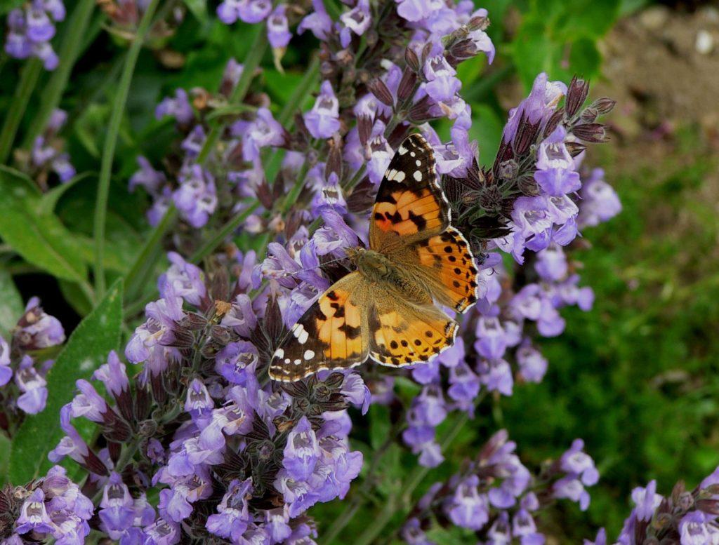 papillon, qu'est ce que la naturopathie?