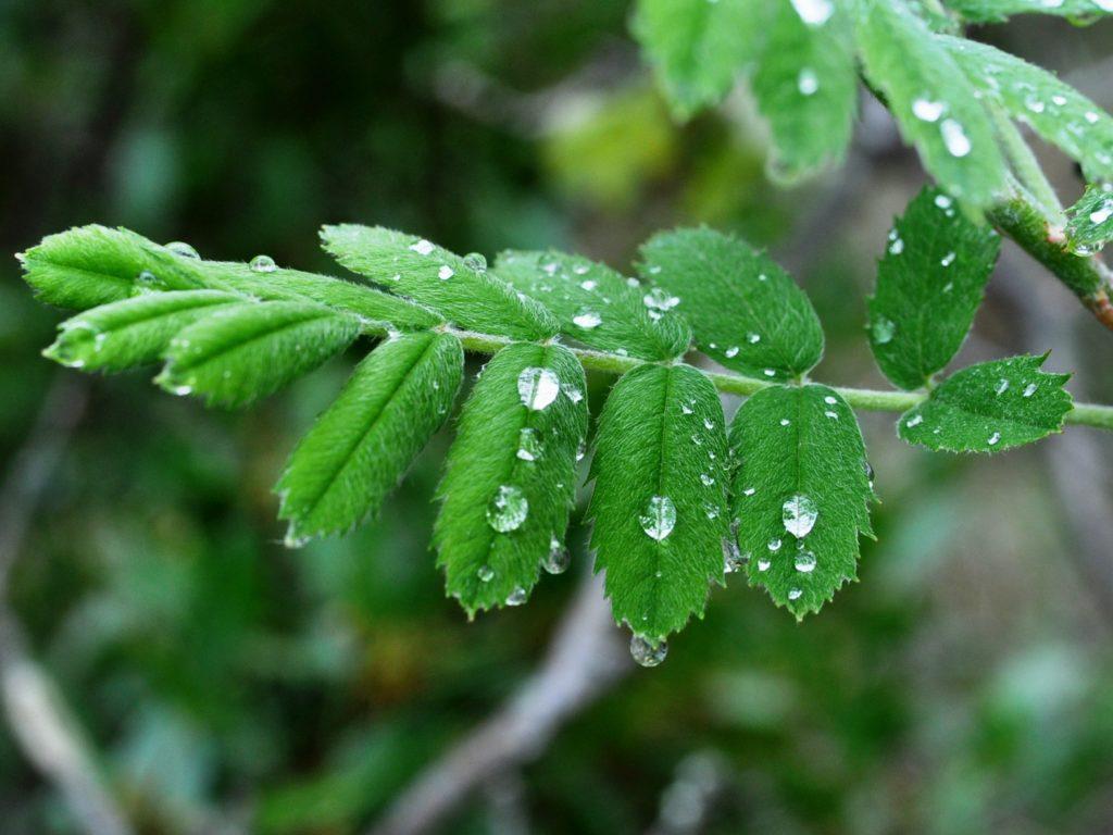 gouttes d'eau, nature, énergie