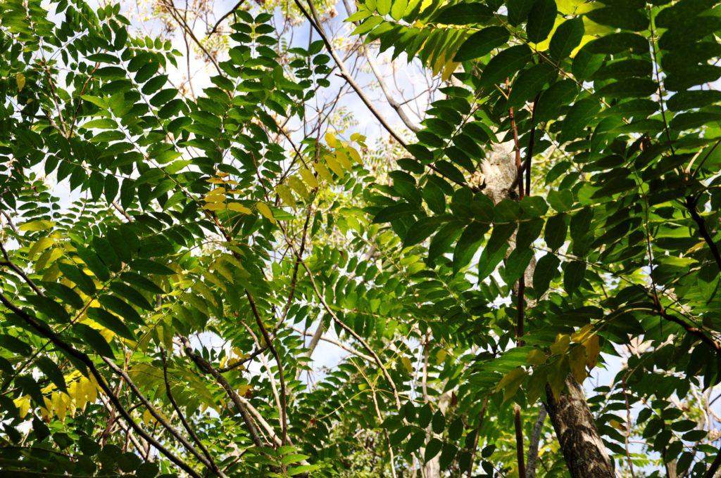 feuilles, lumière, énergie, soin